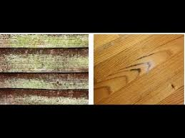 how to clean mold wood