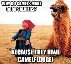 Camel Meme - because they have camouflage funny meme