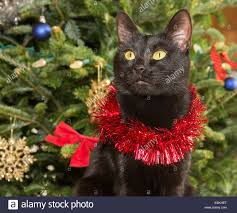 cute black cat wearing tinsel against green christmas tree