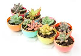 succulent planters craft it diy mini spring succulent planters a kailo chic life