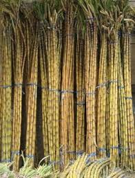 26 best sugar cane images on pinterest sugar backyard and bookcases