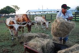 Southfork Ranch Dallas by Rose Baca Southfork Ranch