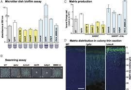 si ge de la soci t g n rale electron shuttling antibiotics structure bacterial communities by