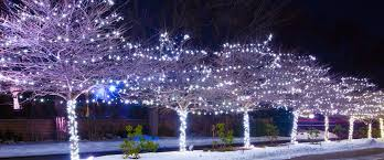 Landscape Tree Lights Denver Lights Outdoor Lighting In Denver Colorado