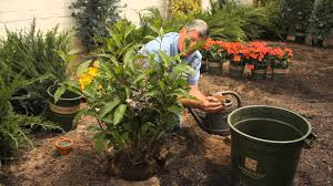tips on transplanting a lilac bush garden savvy youtube