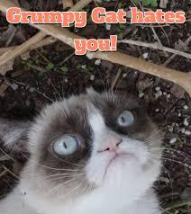 Grumpy Cat Meme Generator - grumpy cat meme generator exle