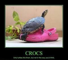 Turtle Memes - turtle memes funny turtle pictures memey com