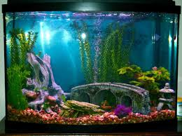 aquarium decor how to select for small