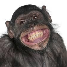 Meme Smile - big monkey smile meme generator