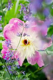 205 best garden flowers u0026 plants images on pinterest flower