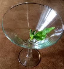 martini basil lemon lime basil martini strictlydelicious