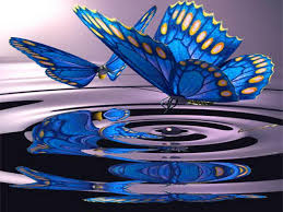 artistic ideas for reflection butterfly reflection curiosities