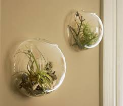 creative idea clear glass ball air plant terrarium ideas cute