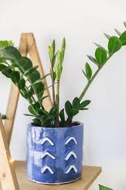 best 25 indoor house plants ideas on pinterest low light