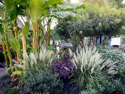 Tropical Plants For Garden - 5 tropical plants for zone 8