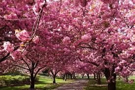 immagini di giardini fioriti giardini fioriti pi禮 belli mondo foto nanopress viaggi