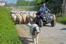 Le berger et la porte dans Communauté spirituelle