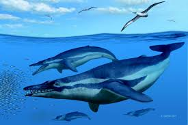 30 million year old whale provides insight into how modern whales