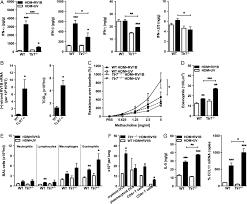 toll like receptor 7 governs interferon and inflammatory responses