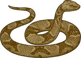 snake clip art for kids free clipart image gclipart clip art