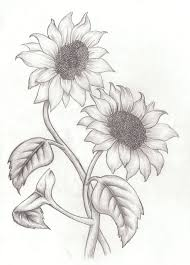 pictures sun flower pencil sketch drawing art gallery