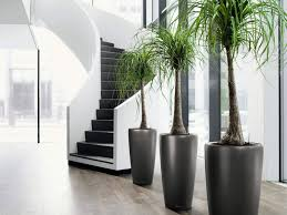 home decor interior wonderful design modern indoor plants