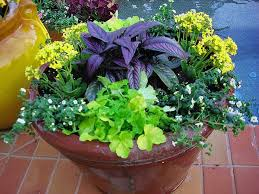 Landscaping Ideas For Florida by 31 Best Florida Landscaping Ideas Images On Pinterest