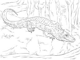 chinese alligator coloring free printable coloring pages