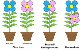 4 plant reproductive systems plantbreeding