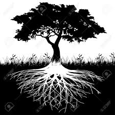 best 25 tree roots ideas on roots nature of roots
