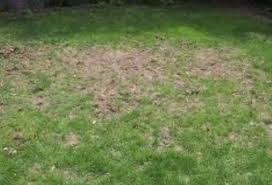 How To Get Rid Of Moles In The Backyard by 28 Moles In Backyard Gallery For Gt How To Get Rid Of Moles