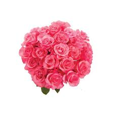 mother u0027s day pink roses mother u0027s day roses mother u0027s day