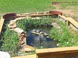 best turtle pond ideas house exterior and interior turtle pond