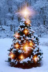 217 best christmas trees and lights images on pinterest