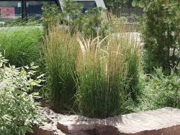 5 types of ornamental grass for decorating the garden