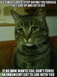 Cat Meme Ladies - all the single ladies get a cat dump a day
