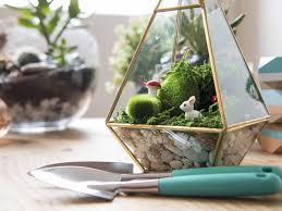 how to make a terrarium realestate com au