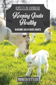 goat health care chapter 5 raising goats homestead handbook