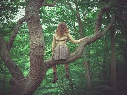 you re never to climb a tree mnn nature