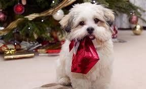 Cute Christmas Meme - happy christmas with animals cute animal pictures and videos blog
