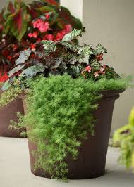 7 color combos that work for beautiful container gardens garden club