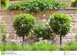 ornamental topiary trees home decorating interior design bath