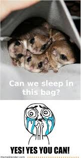 Cuteness Overload Meme - cuteness overload meme can we sleep in this bag critterz
