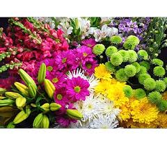 cut flowers send fresh flowers and designs in ajax pickering whitby and