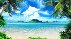 jdd palm tree beaches wallpapers 36 wallpapers of palm tree