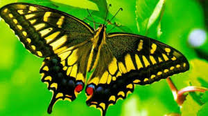 butterfly moth flower download butterfly photo hd 16 9 high