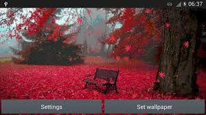 red leaves live wallpaper android apps on google play