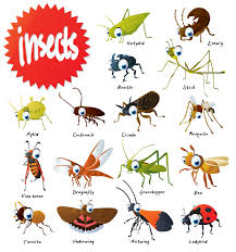 the wonderful world of insects pitara kids network clip art