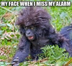 Alarm Meme - my face when i miss my alarm funny memes