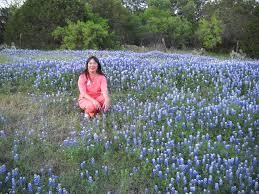 real texas bluebonnets